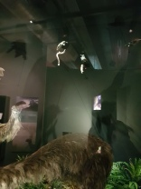 Mase took this one - the moa on the left!!!